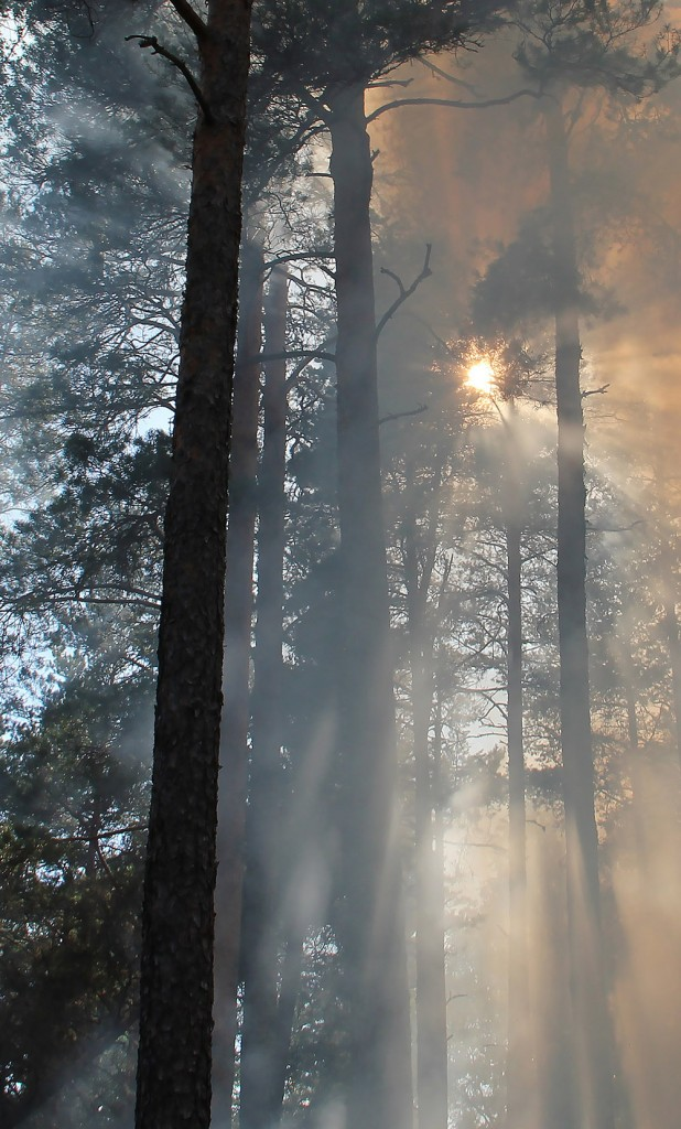 forest-fire-433683-crop