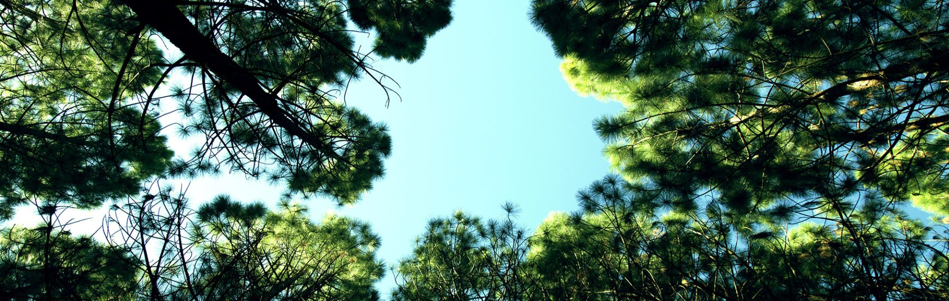 looking up to the sky through trees