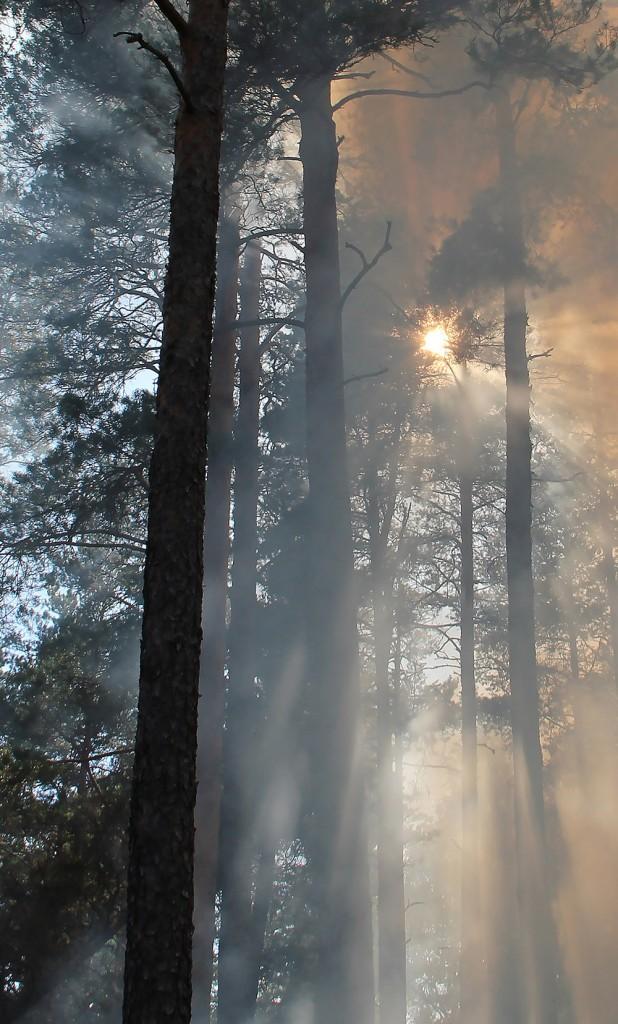 forest-fire-433683-crop